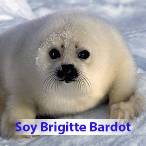 thumbnail_Plantilla-foca-copia-resized-300×300