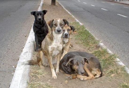 Nuestros Perros son realengos pero son nuestros perros, ¡Protégelos!
