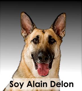 alain-delon-yo soy
