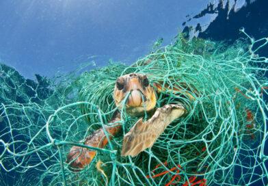 Las Redes marinas trampa mortal