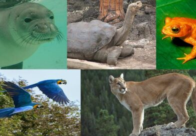 El reloj de la extinción de los animales